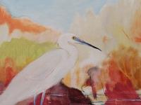 a-little-egret